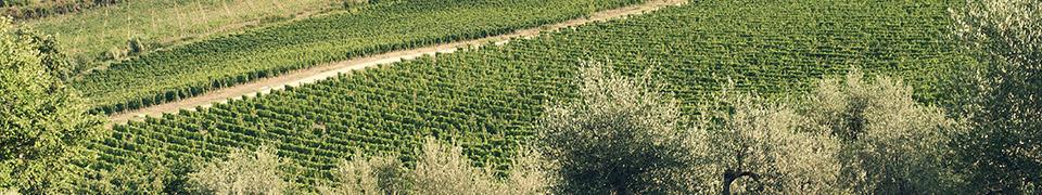 Pesticides Free